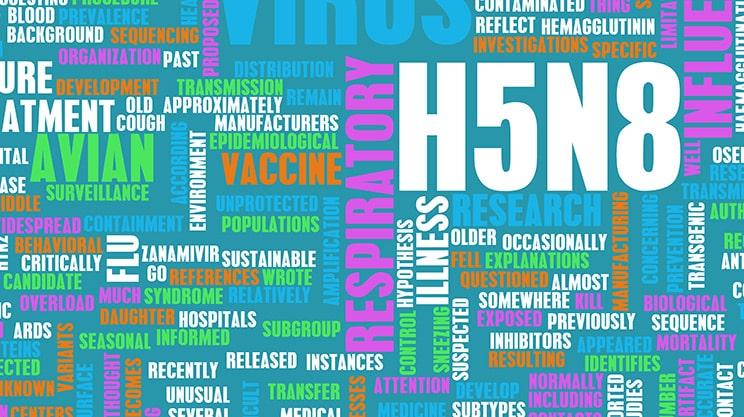 Schadensfälle durch Vogelgrippe – die Zahlen steigen rasant an