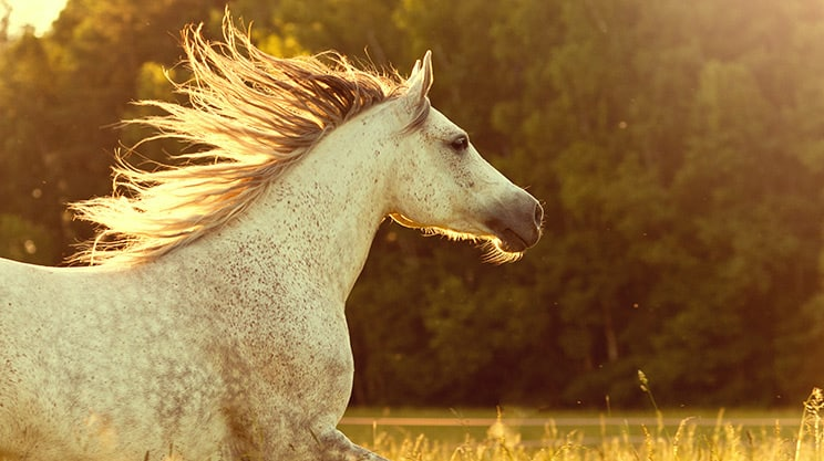 Was beinhaltet eine Pferdehaftpflichtversicherung?