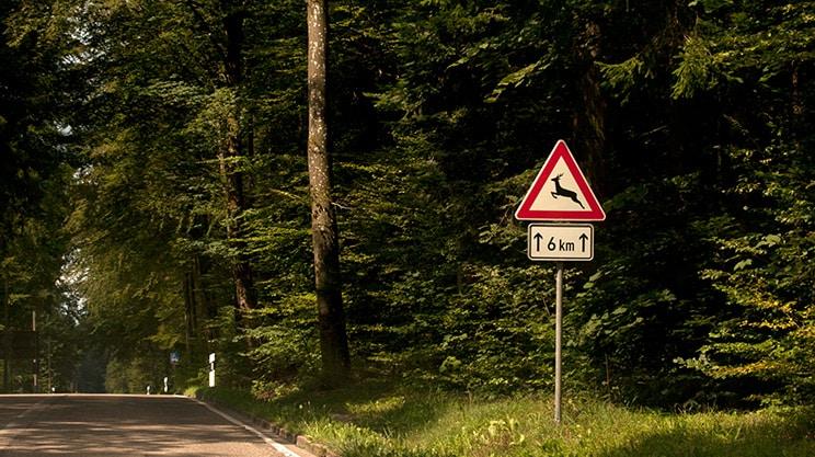 Wildunfälle – wann zahlt die Versicherung?