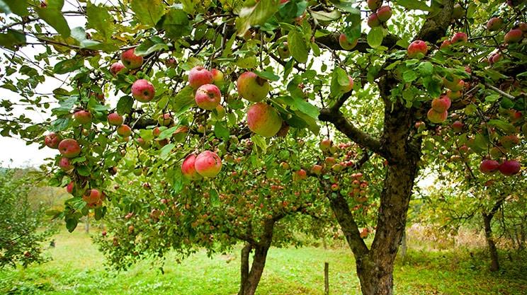Der Klimawandel treibt Obstbauern und Winzer zu den Versicherungen