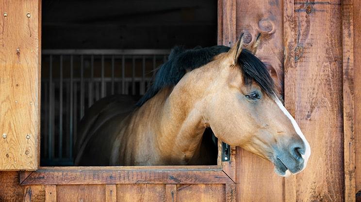 Die Pferdehaftpflichtversicherung – für Pferdebesitzer ein Muss