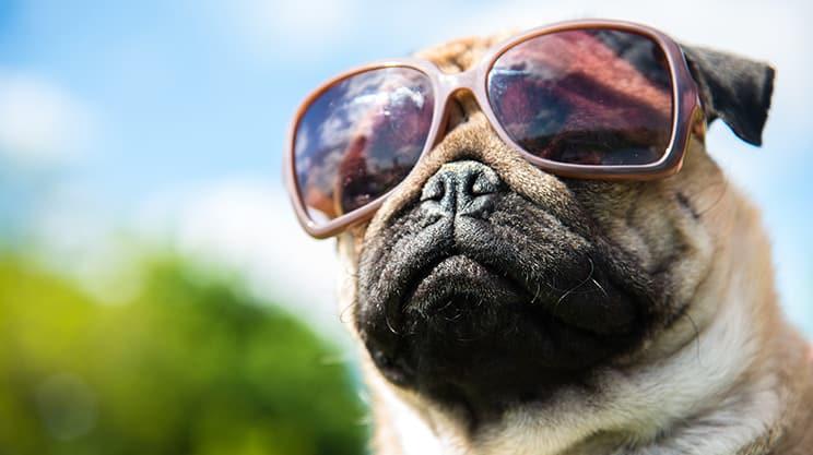 So wichtig ist die Hundehaftpflichtversicherung im Urlaub